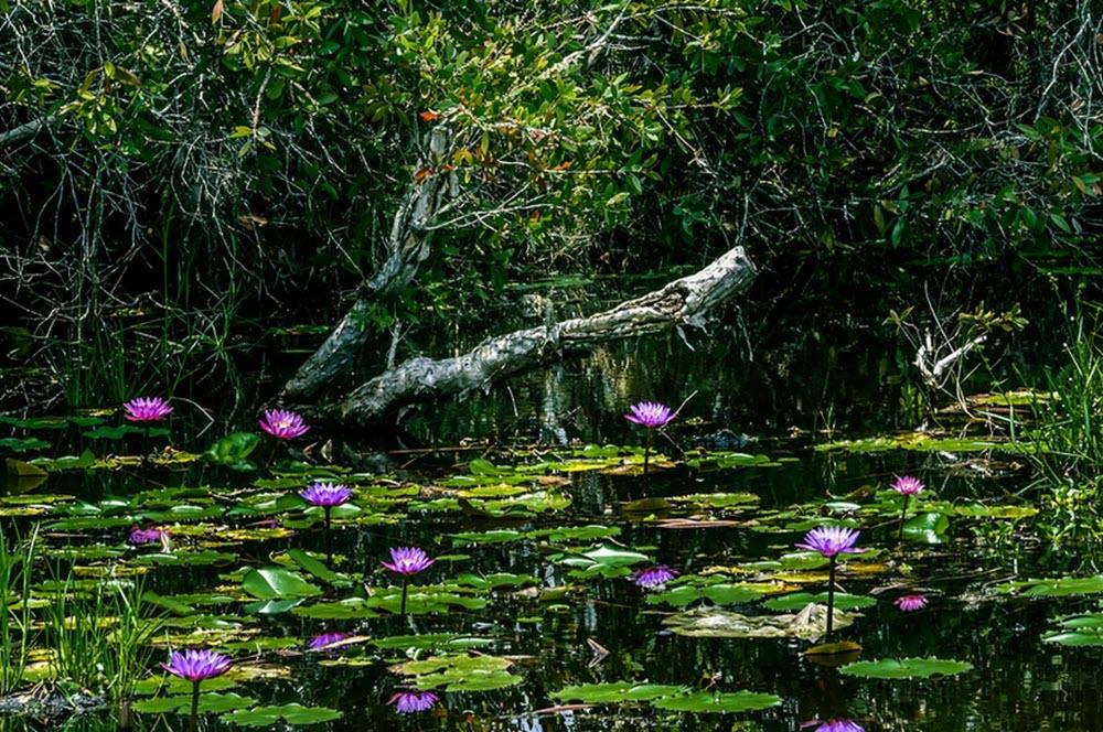 pond nicaragua